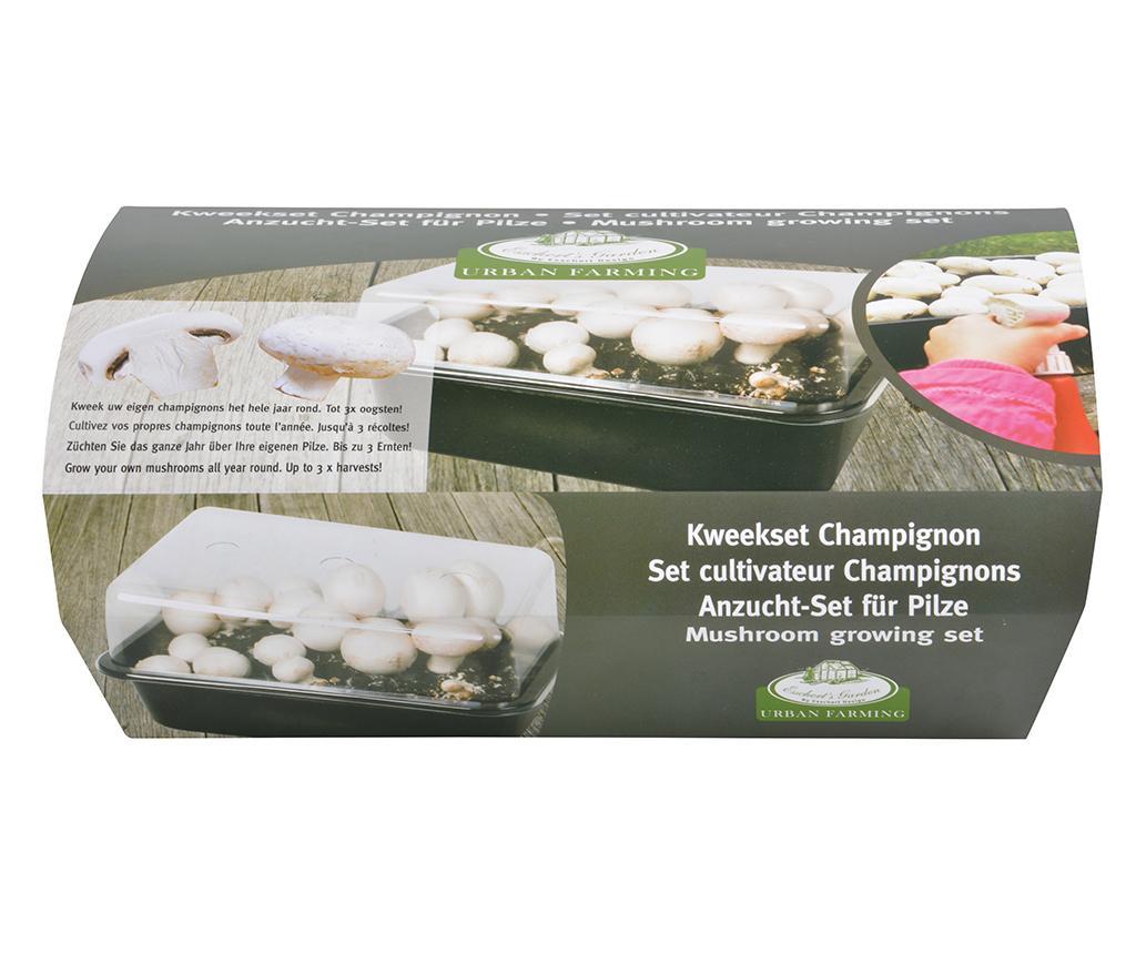 Zestaw do uprawy grzybów Champignon