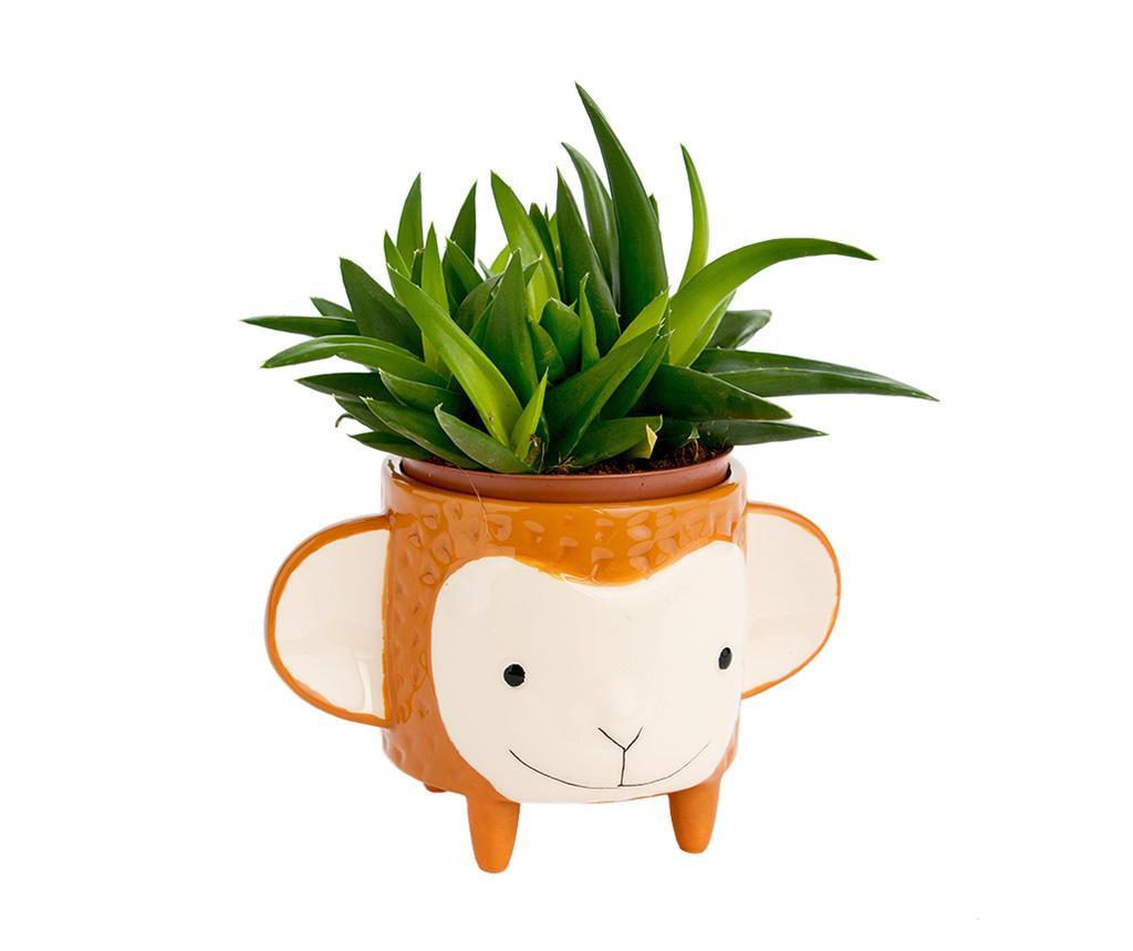 Květináč Monkey