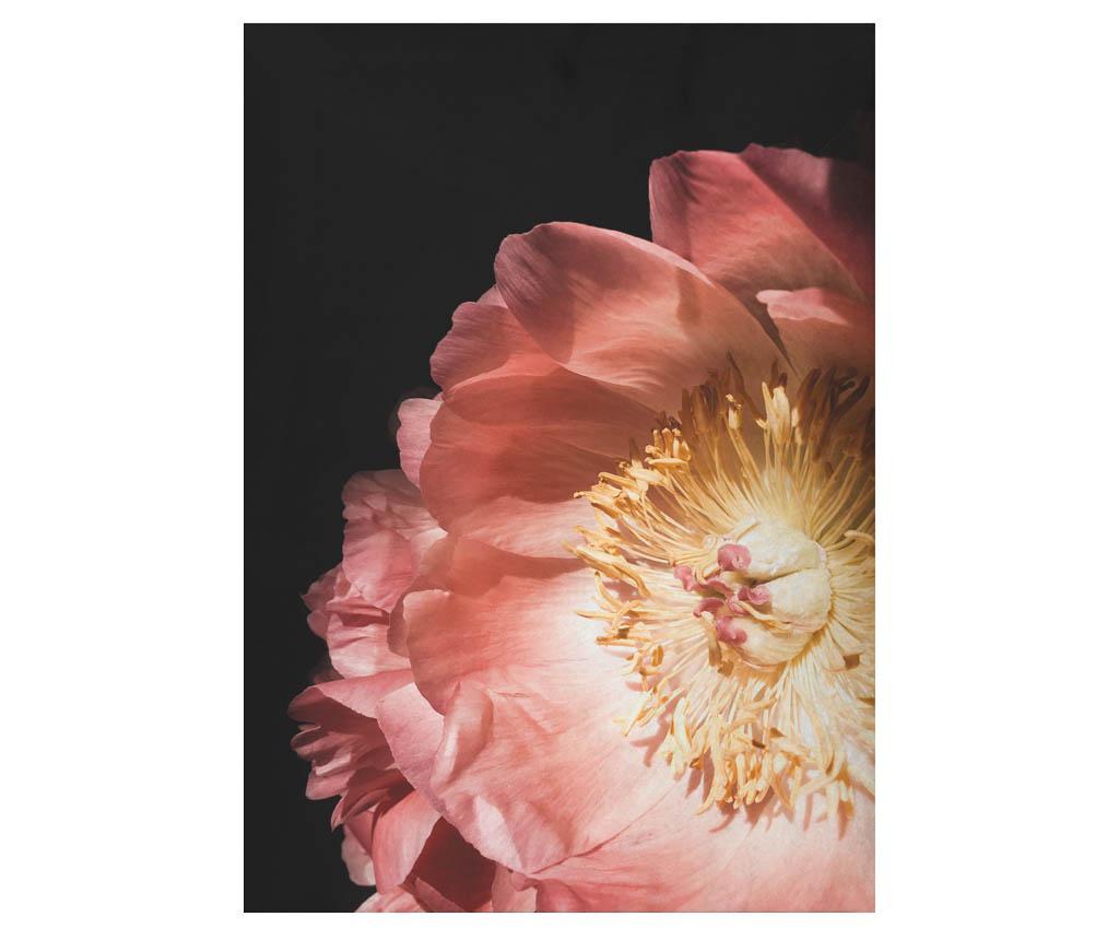 Tablou Rose Flowers 50x70