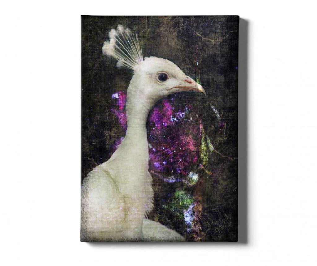 Slika Peacock Bird 40x60 cm